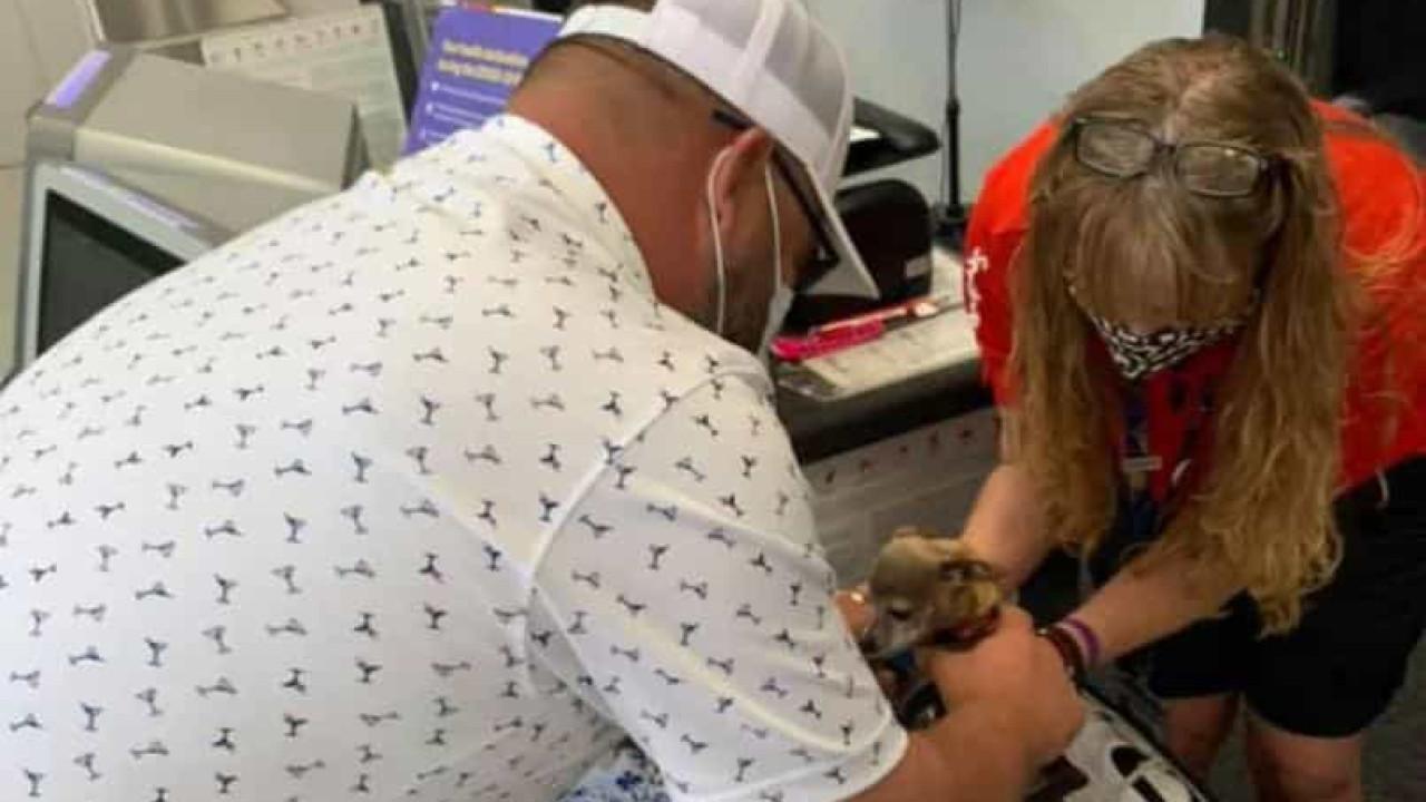 Passageiros com peso a mais na mala encontram cadela escondida numa bota