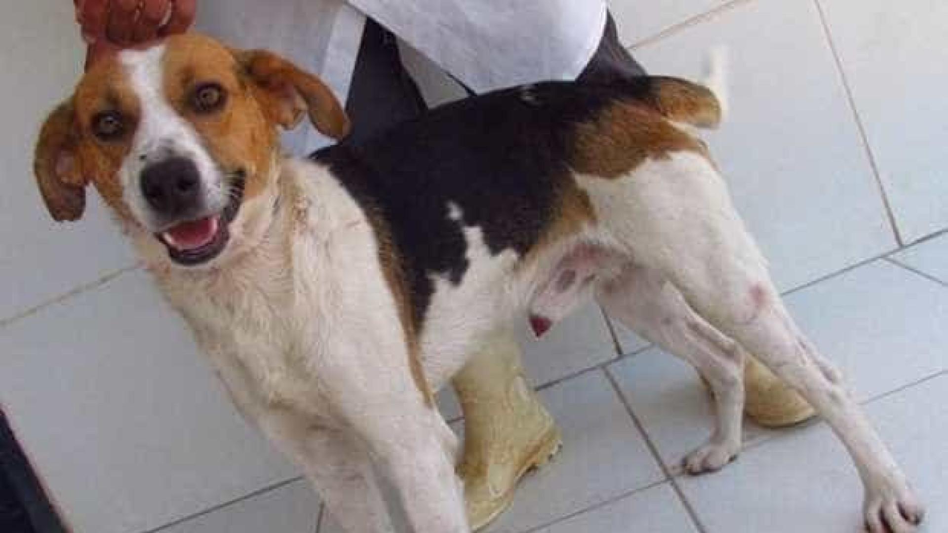 Uso de cães de rua em experimentos na UFV gera protestos