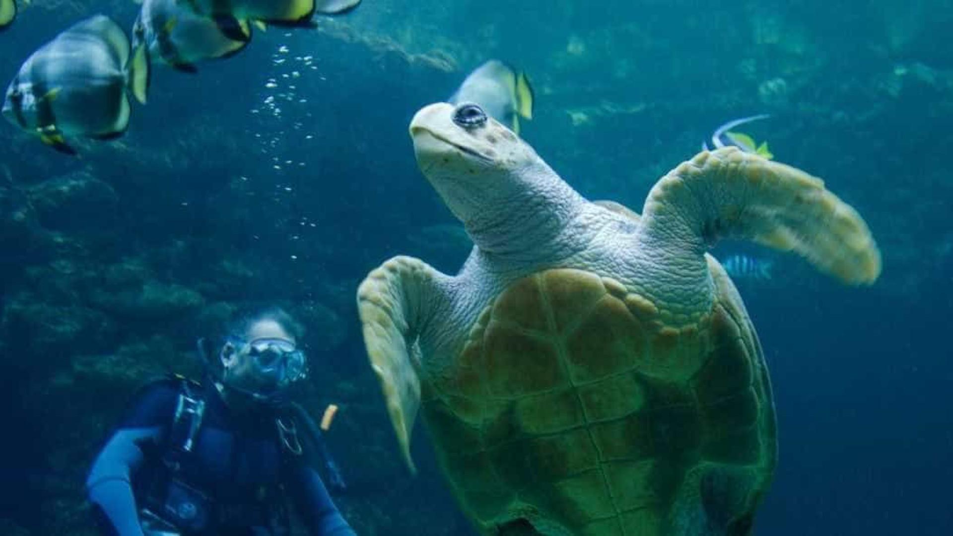 Nova espécie de tartaruga gigante é descoberta em Galápagos