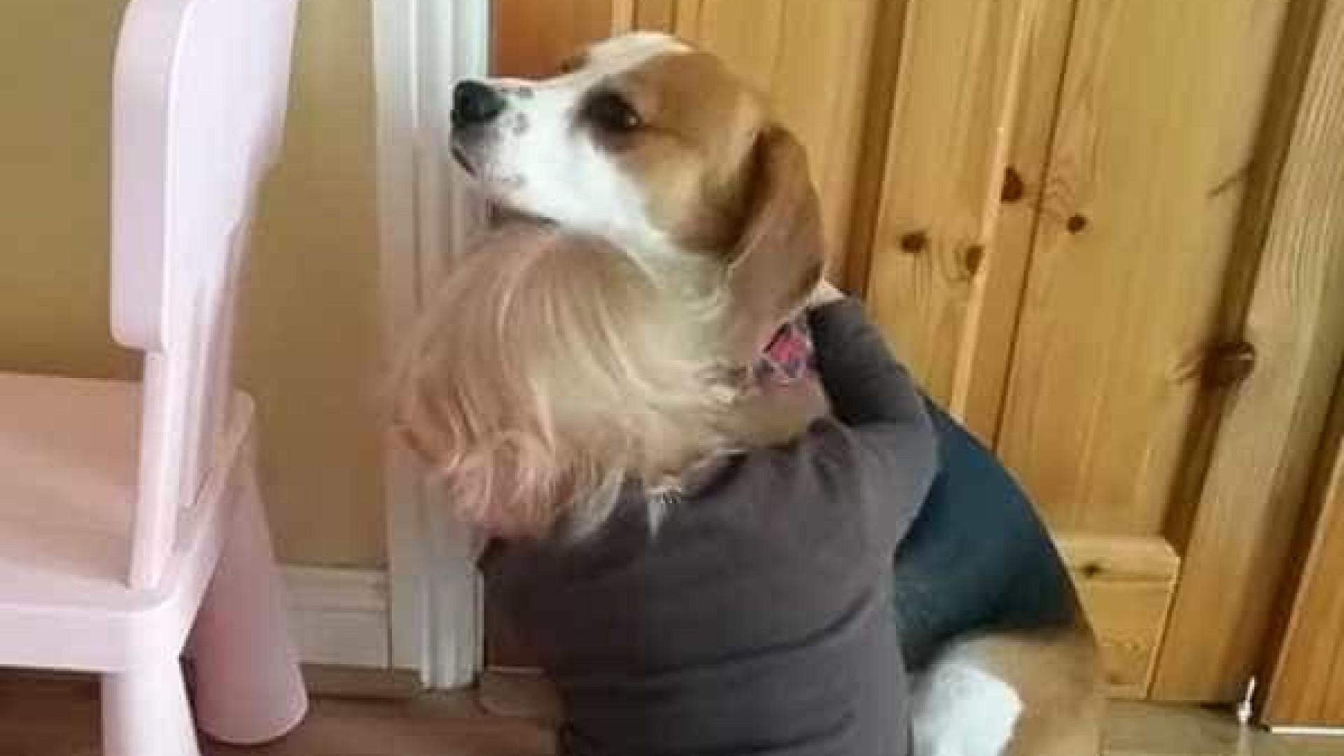 Após quebrar prato, cachorro é consolado por bebê