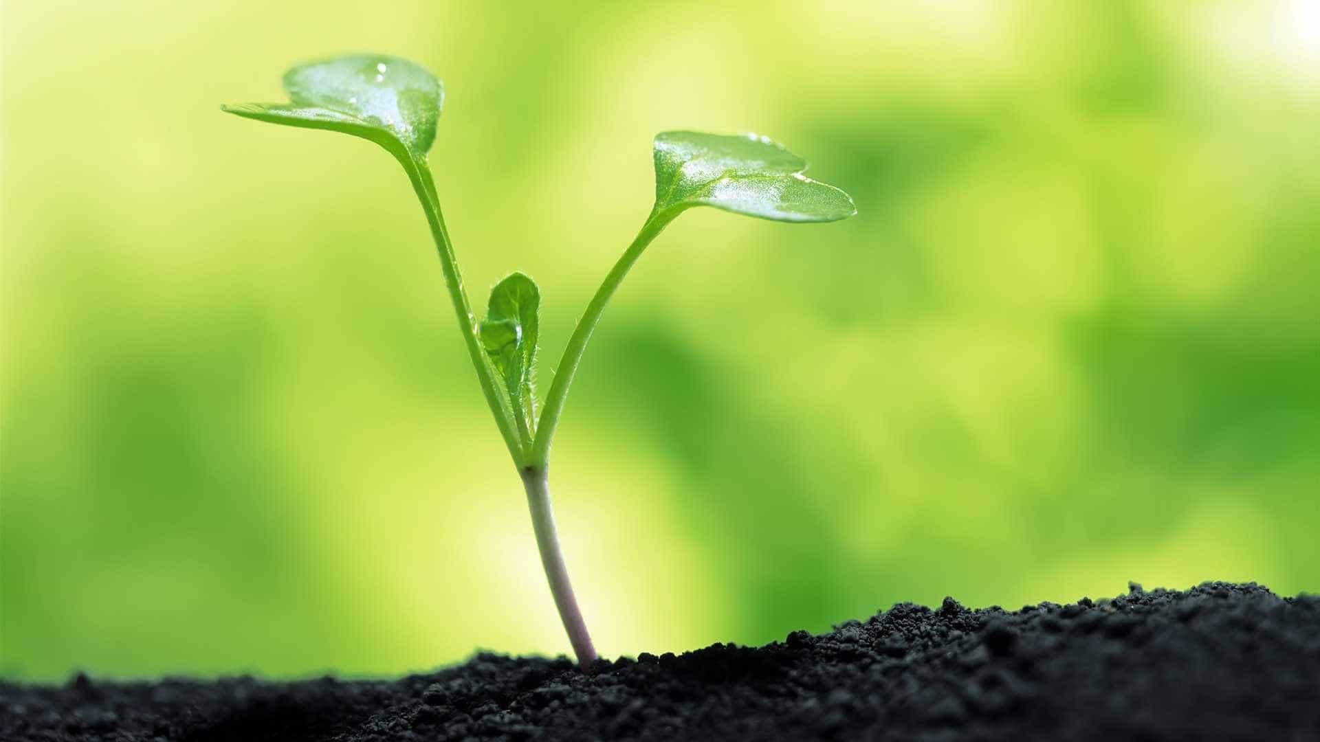 3 fatos sobre as plantas que você não sabia