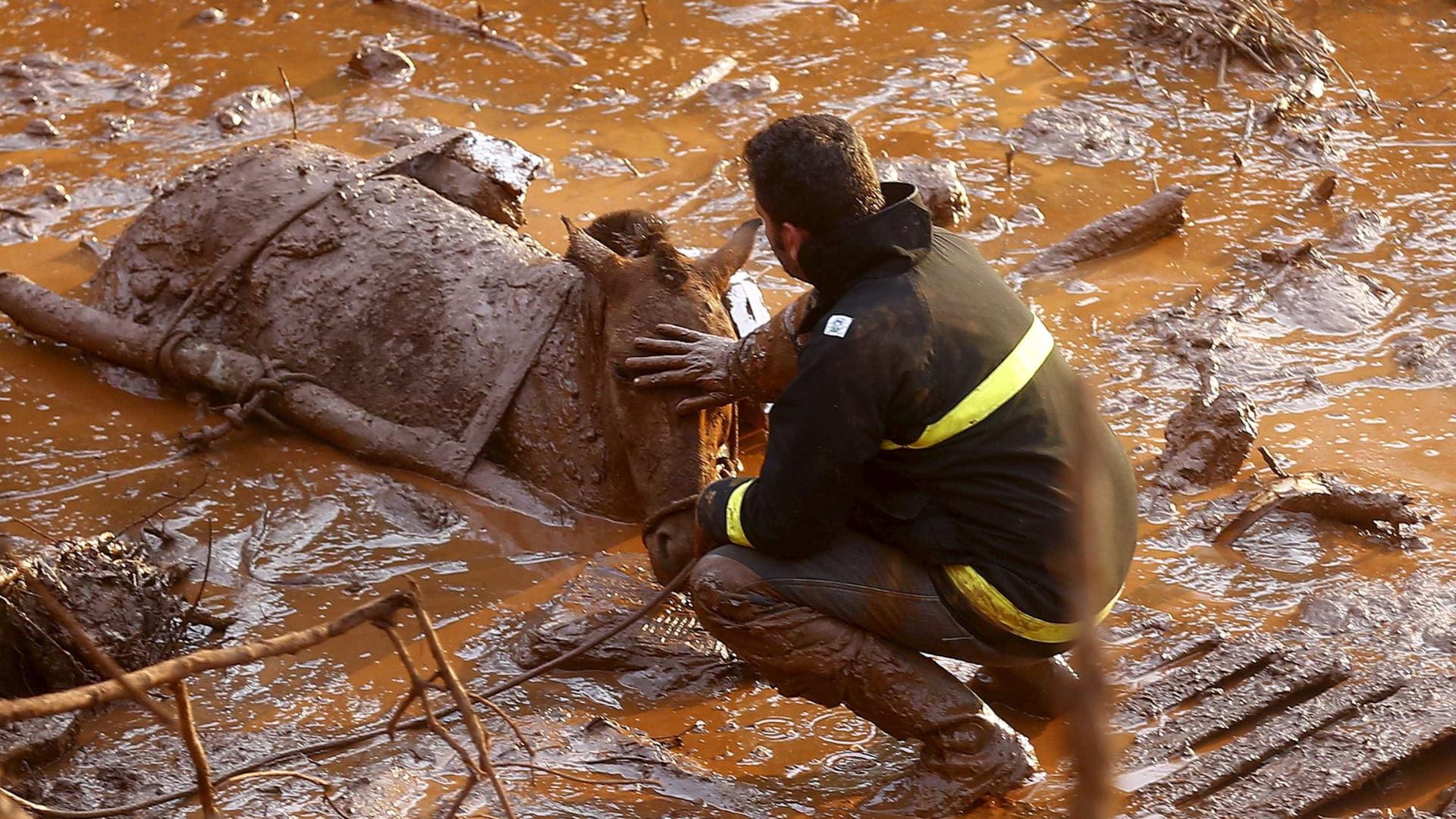Urubus 'ajudam' bombeiros nas buscas por corpos em Mariana