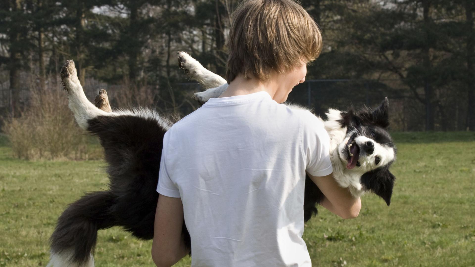 Cientistas estão preparando teste de QI para cães