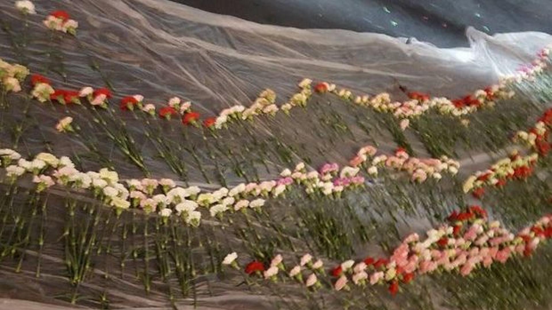 Estudante dá flores para 834 garotas da sua escola