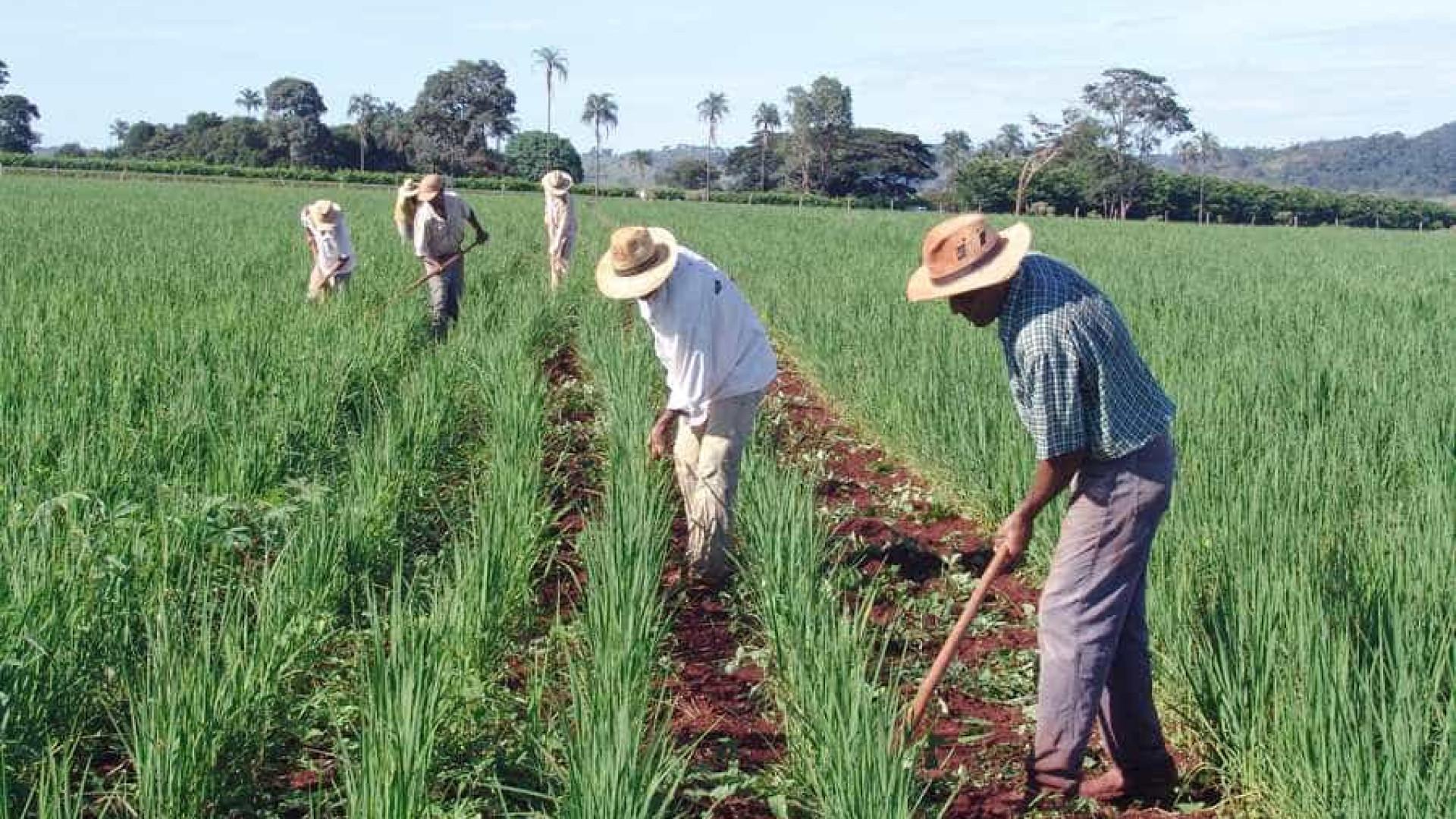 Reforma agrária paralisou no governo Dilma