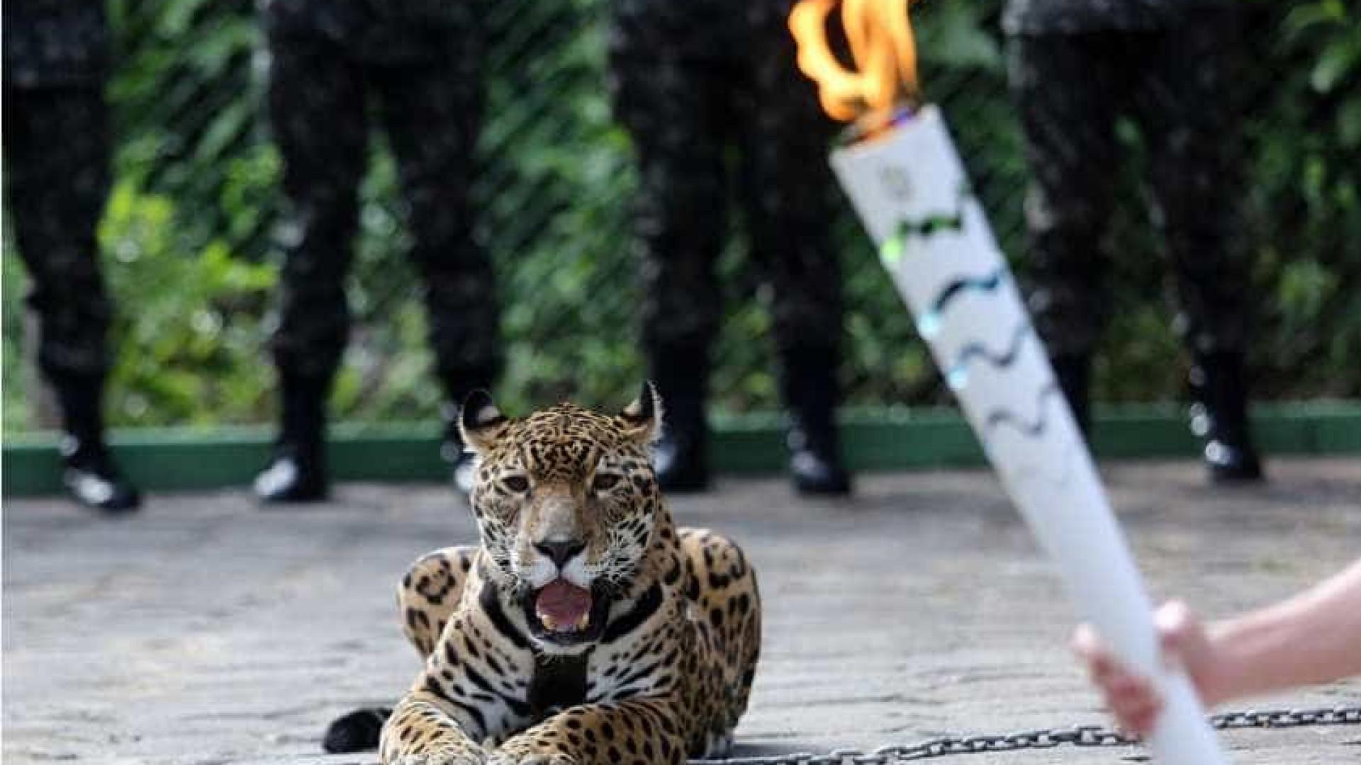 Morte de Juma, a onça abatida pelo Exército, vira caso de Justiça