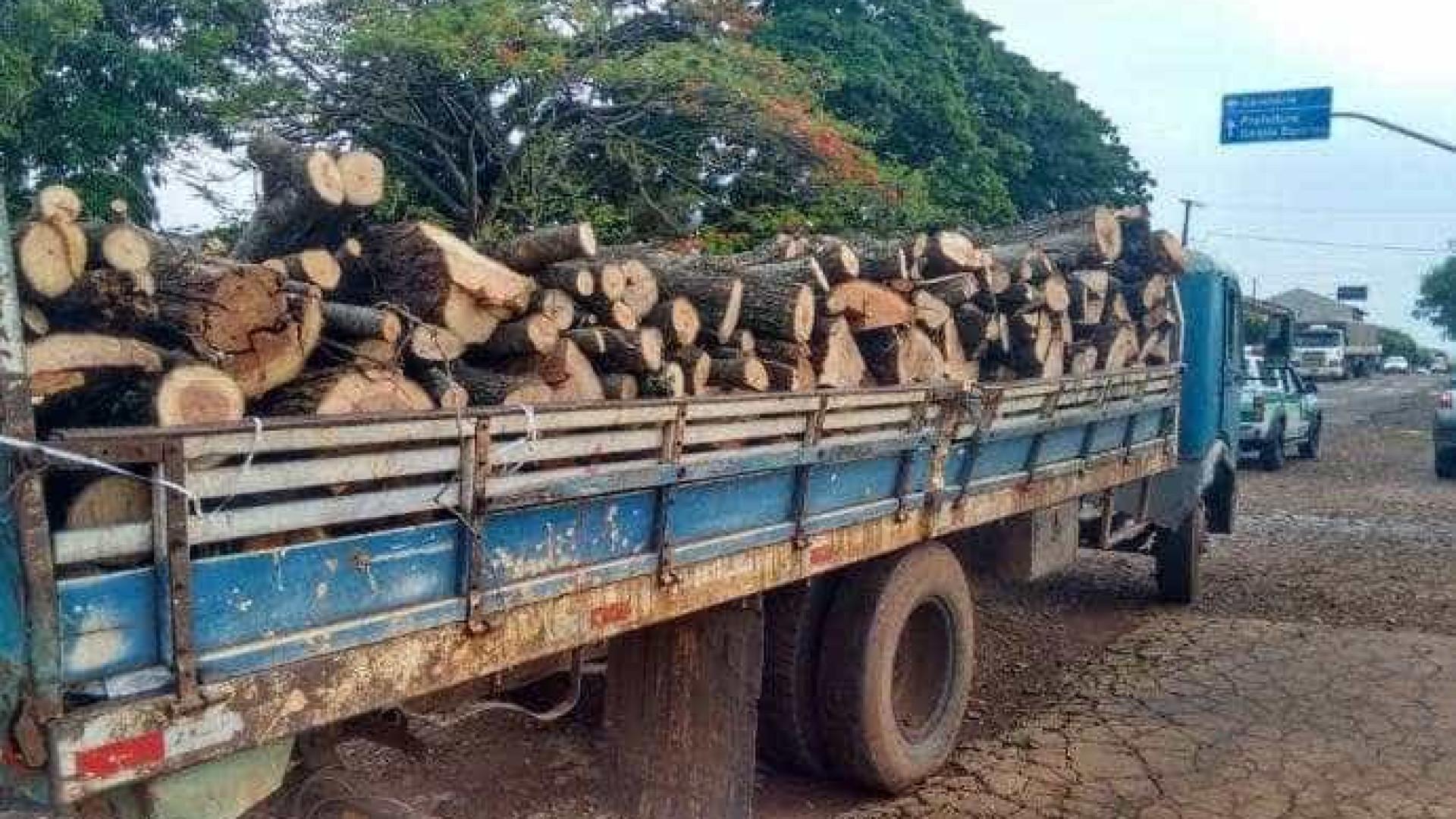 Dois homens são presos por corte ilegal  de árvores nativas