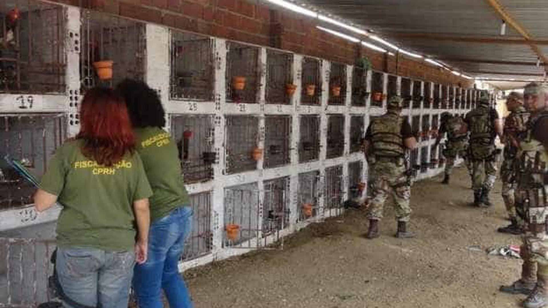 Rinha com 145 galos é desativada  e dono multado em R$ 435 mil