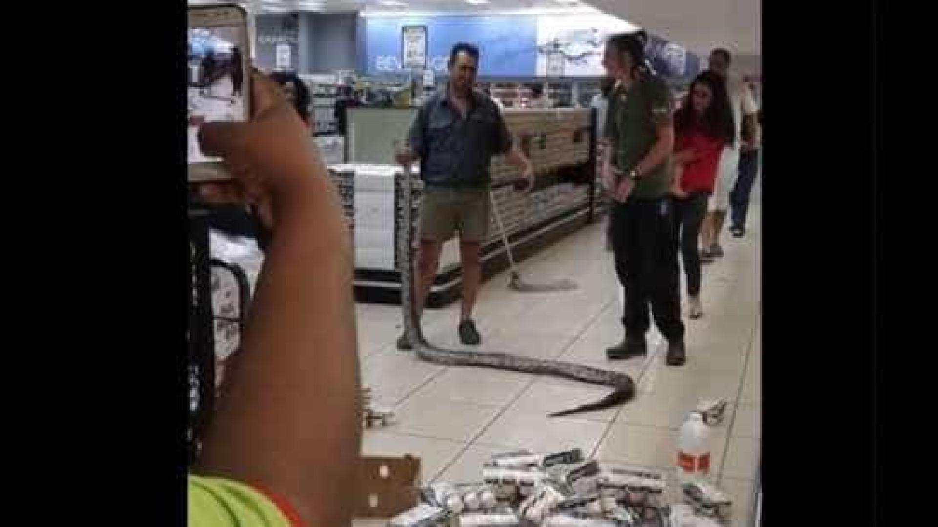 Cobra de 3,5m aparece dentro de geladeira de supermercado