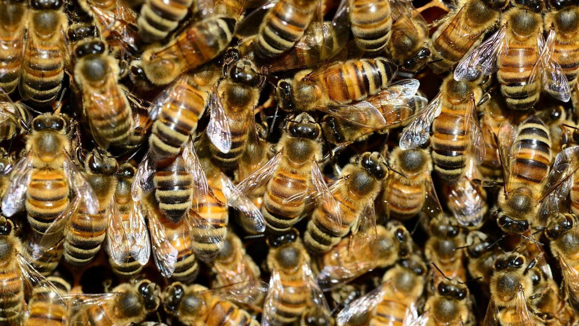 Morre homem que levou cerca de 500 picadas de abelhas para salvar o pai