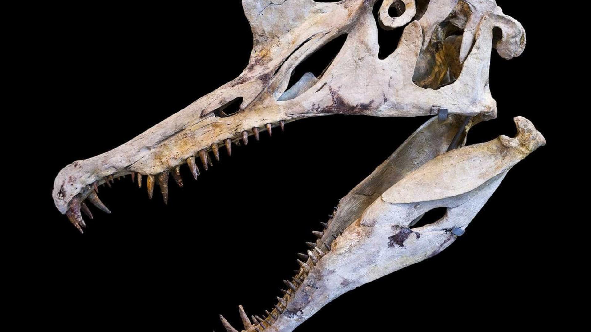 Cientistas brasileiros e chineses descobrem 215 ovos de pterossauros