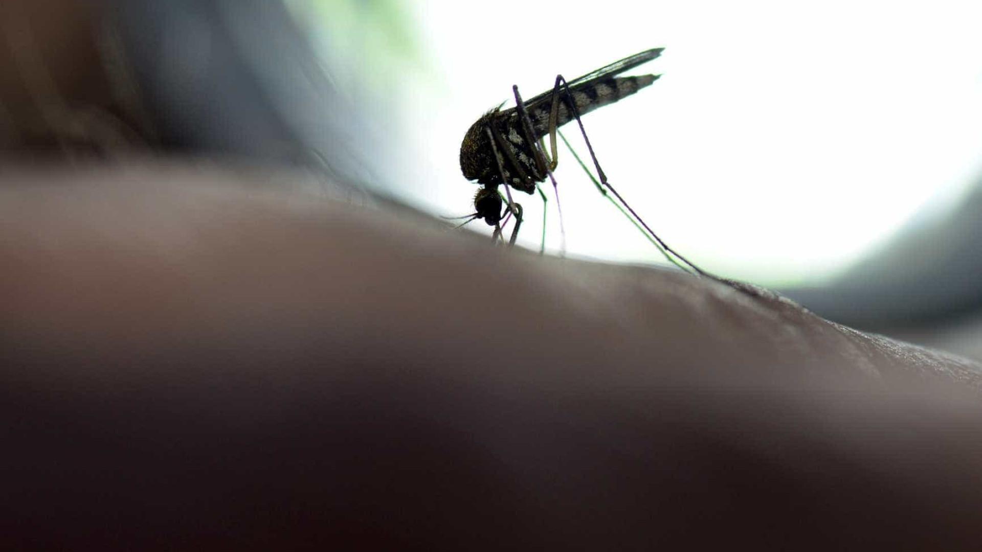 Em SP, luta contra febre amarela ocorre de casa a casa