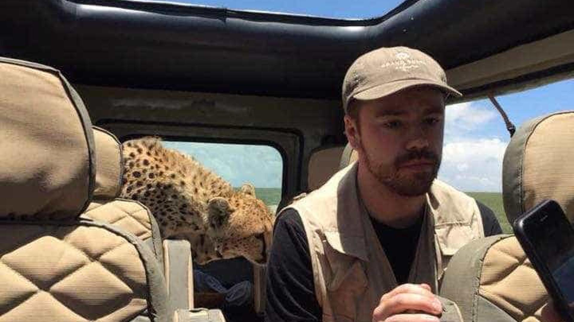 Guepardo invade jipe de turista durante safari na Tanzânia; veja vídeo