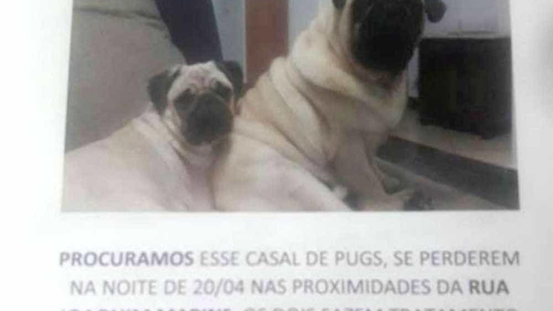 Casal oferece carro como recompensa por cães desaparecidos