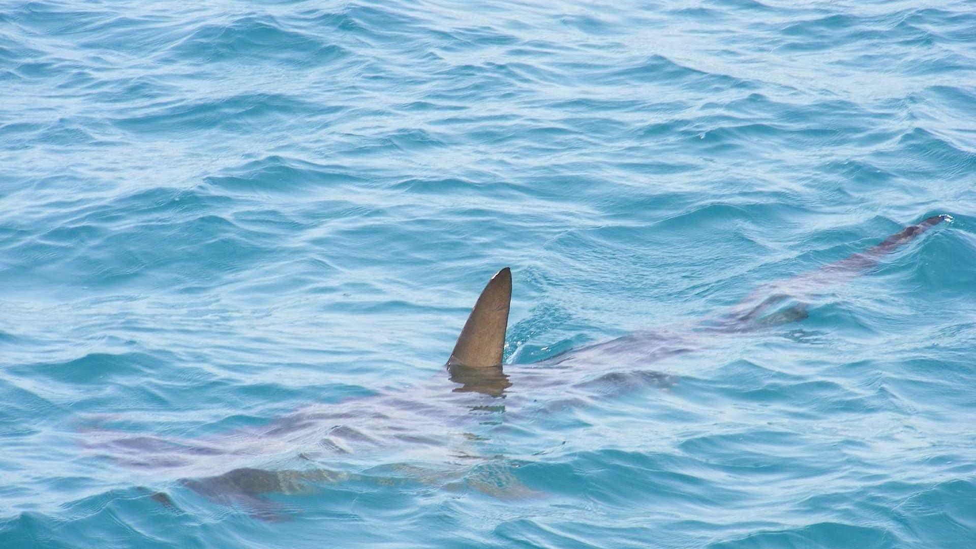 Morre jovem atacado por tubarão em praia no Grande Recife