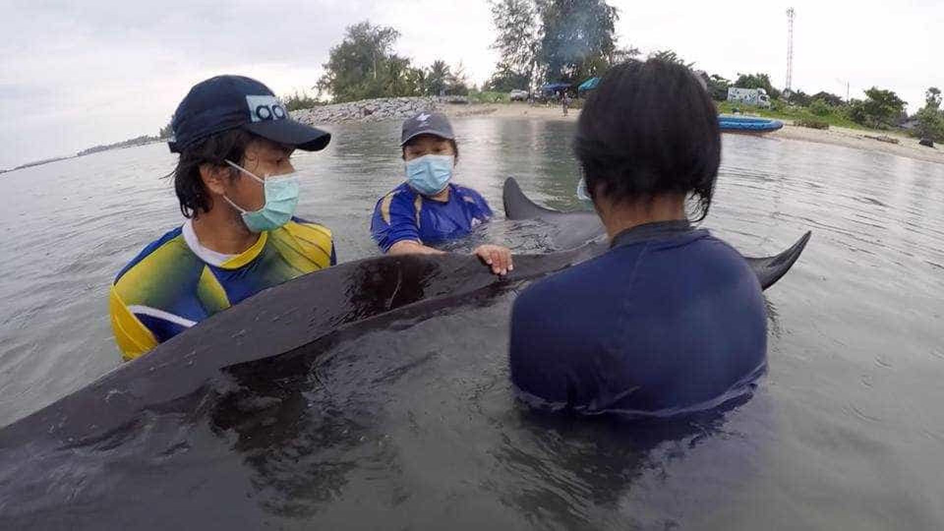 Baleia morre após ingerir 10 quilos de sacolas plásticas
