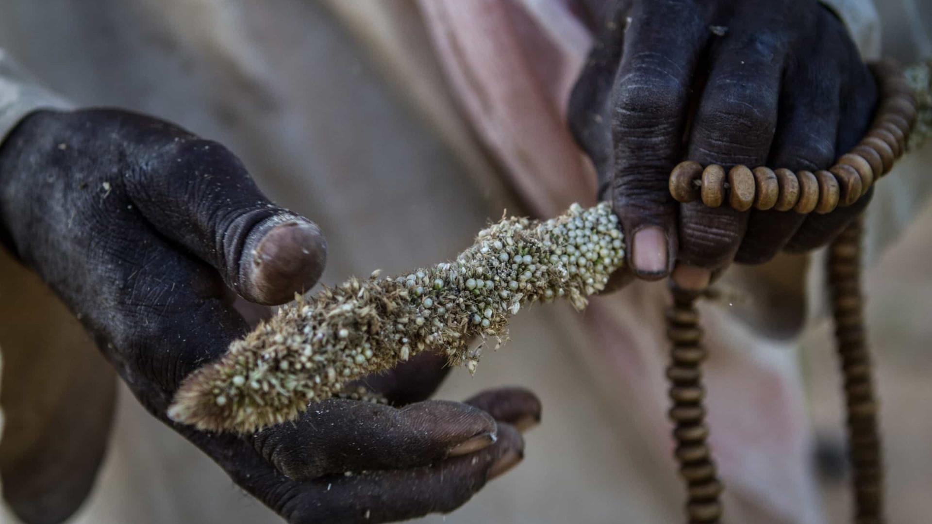 África: Quase 45 mi de pessoas em situação de insegurança alimentar