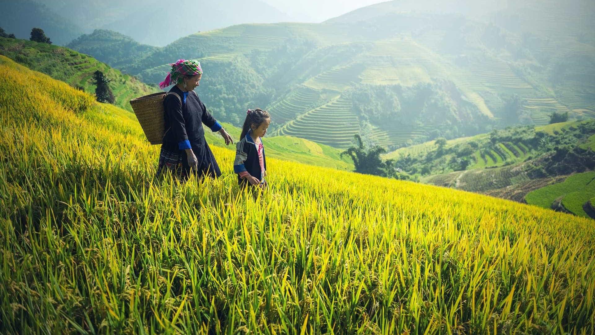 IBGE: Participação de mulheres no campo aumentou nos últimos anos