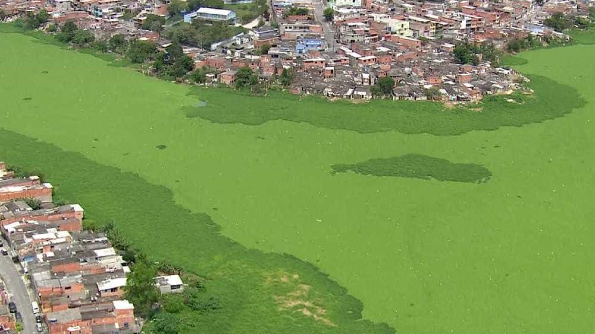 Represa Billings é tomada por 'tapete verde' em São Paulo