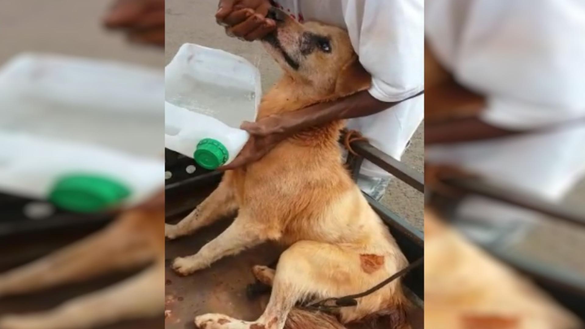 Menor é detido suspeito de arrastar cão amarrado em moto