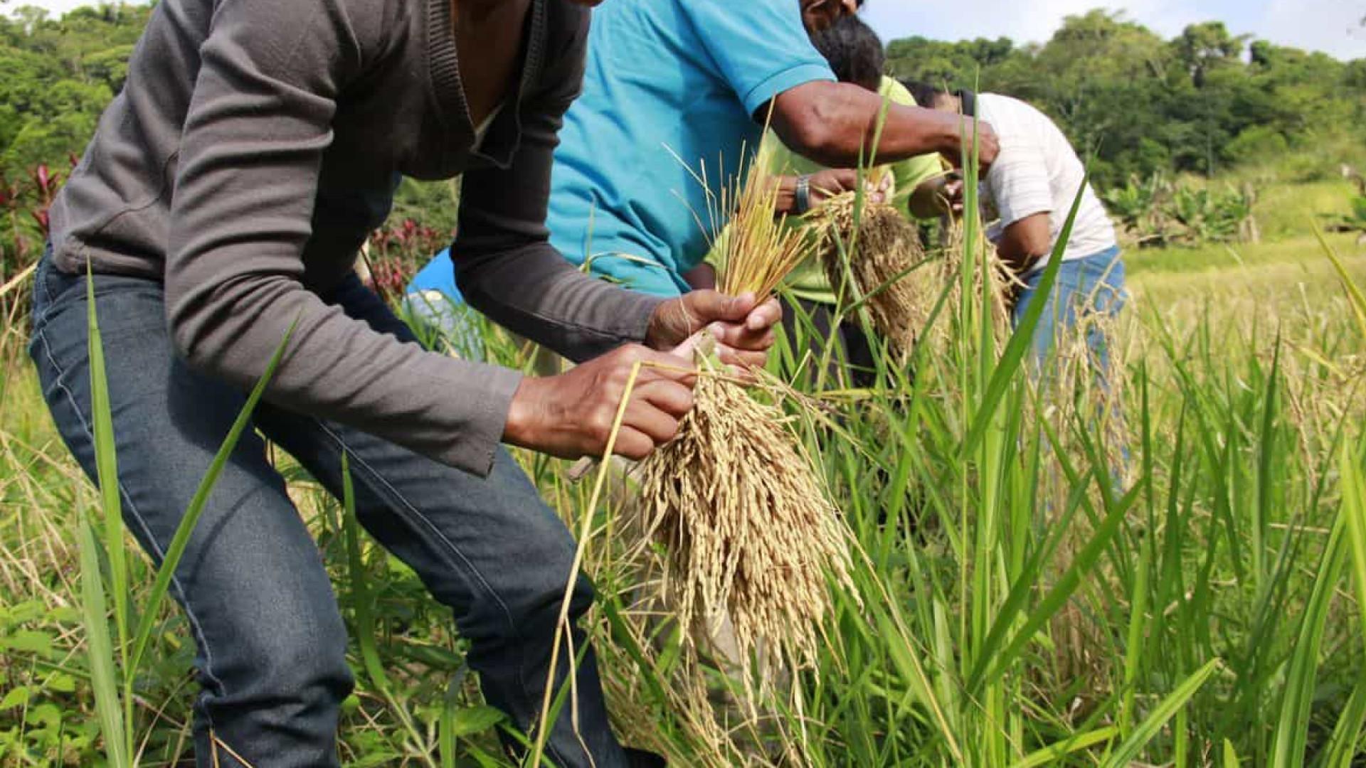 Agricultura define serviços essenciais para assegurar abastecimento