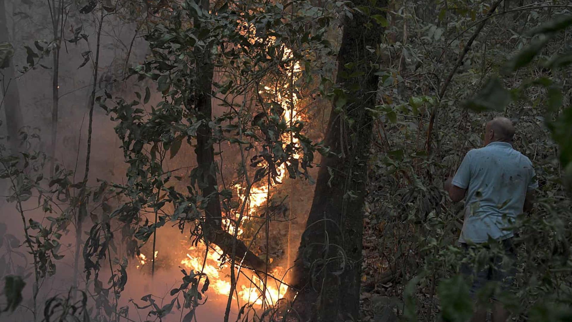 Fogo no Pantanal ameaça maior santuário de onças do mundo