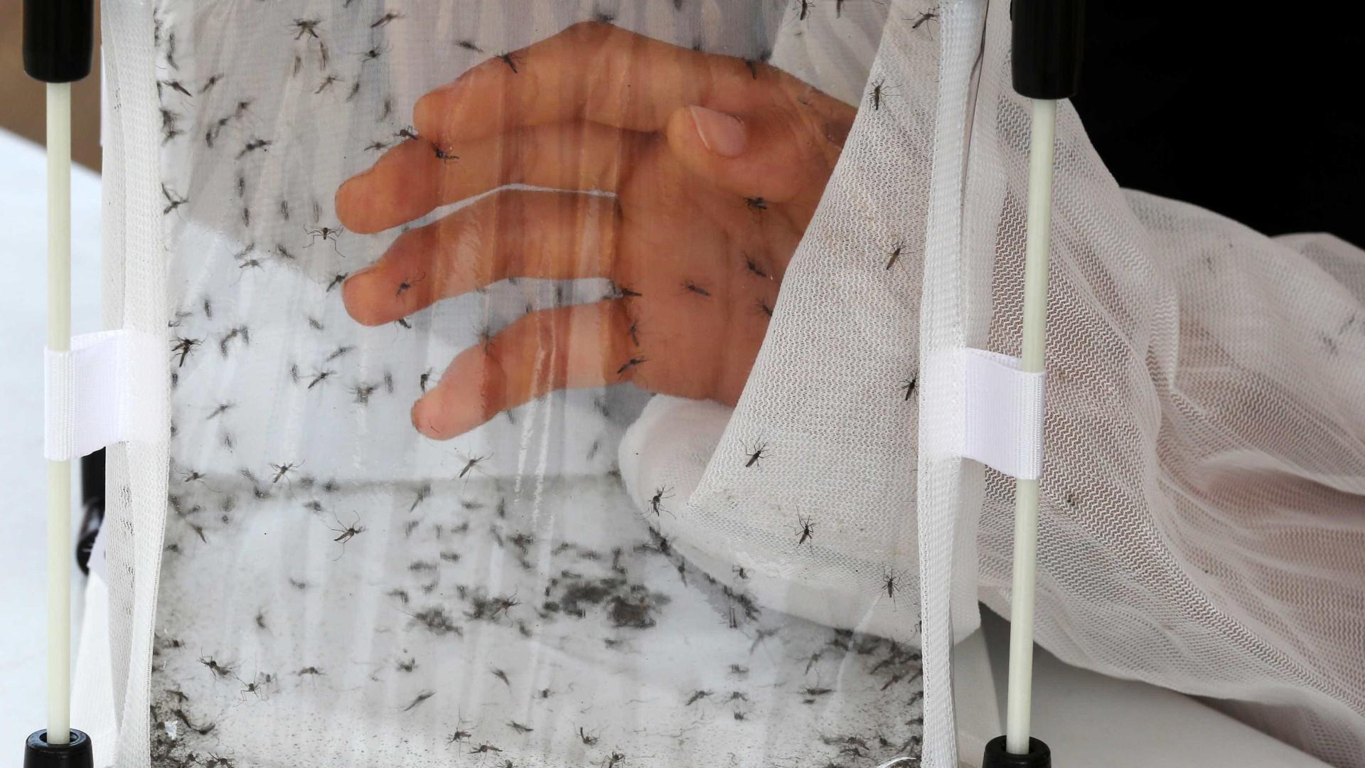 Brasil registra segundo maior número de mortes por dengue em 21 anos