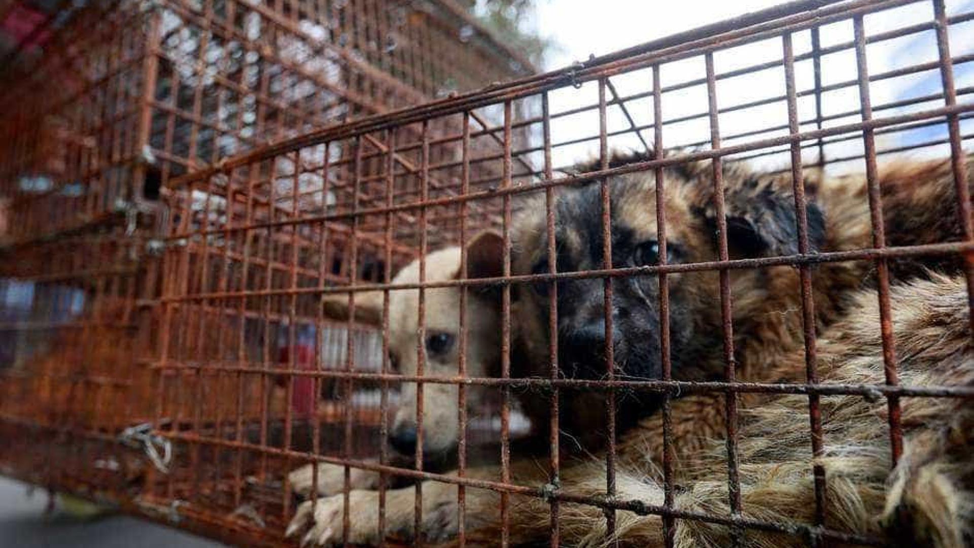 Festival chinês para comer carne de cachorro gera discussões na internet