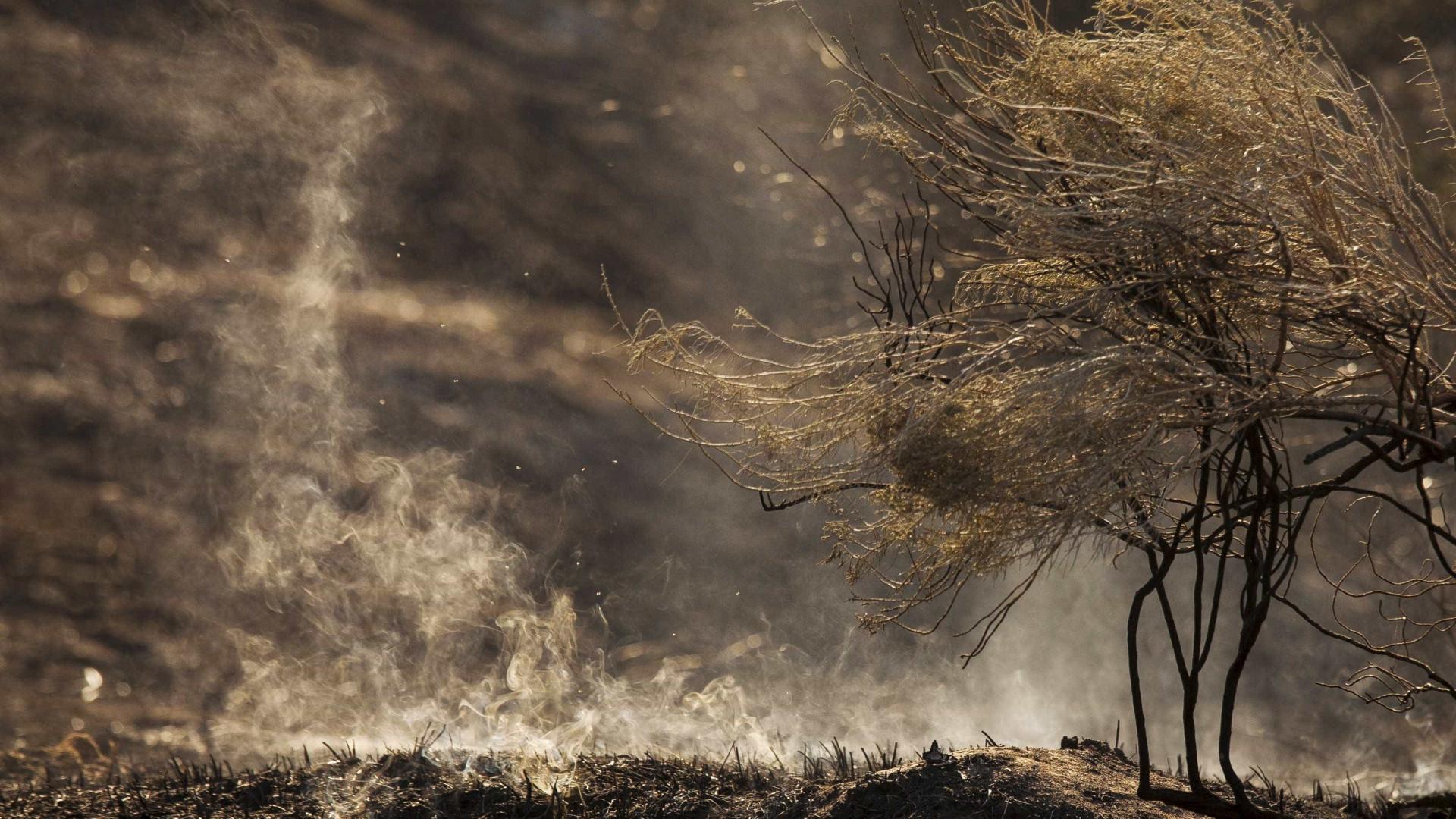 Incêndio no Pantanal já atingiu área igual à da cidade do RJ