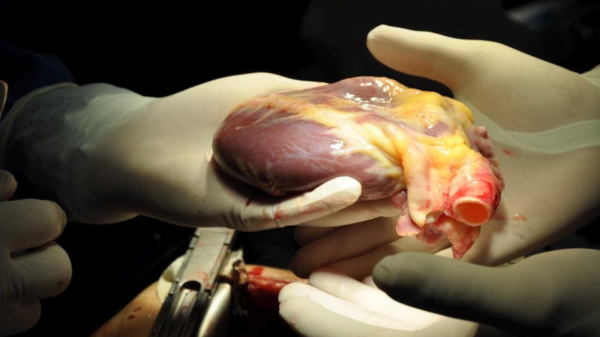 Técnica brasileira inova ao usar 'prótese bovina' para coração