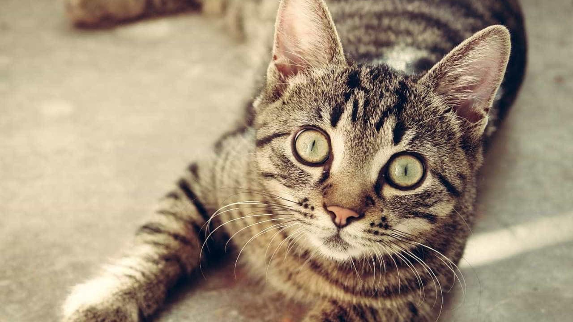 Três coisas que o seu gato gostaria que parasse de fazer