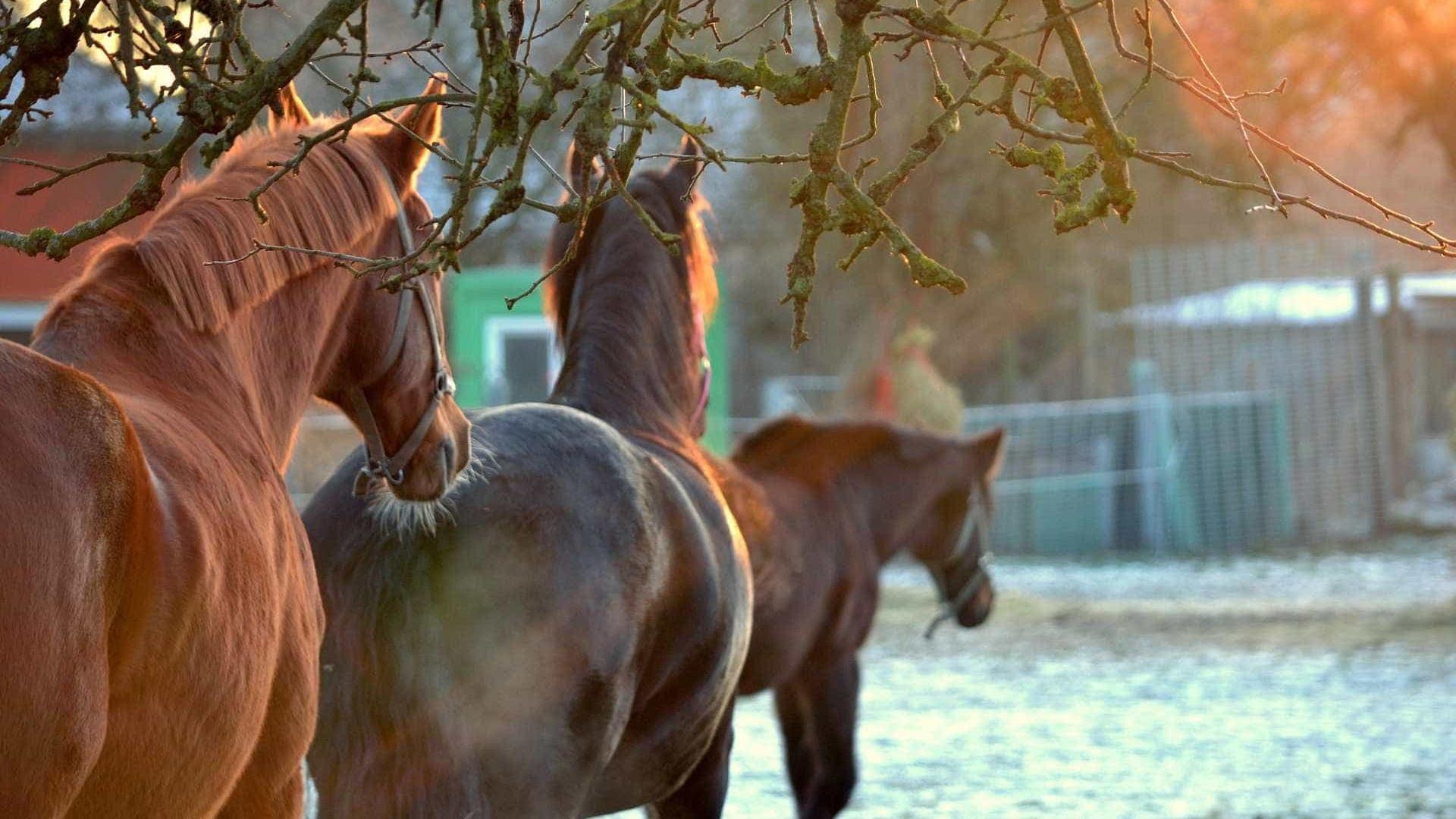 Vinte cavalos são mortos a tiros no Kentucky, nos EUA