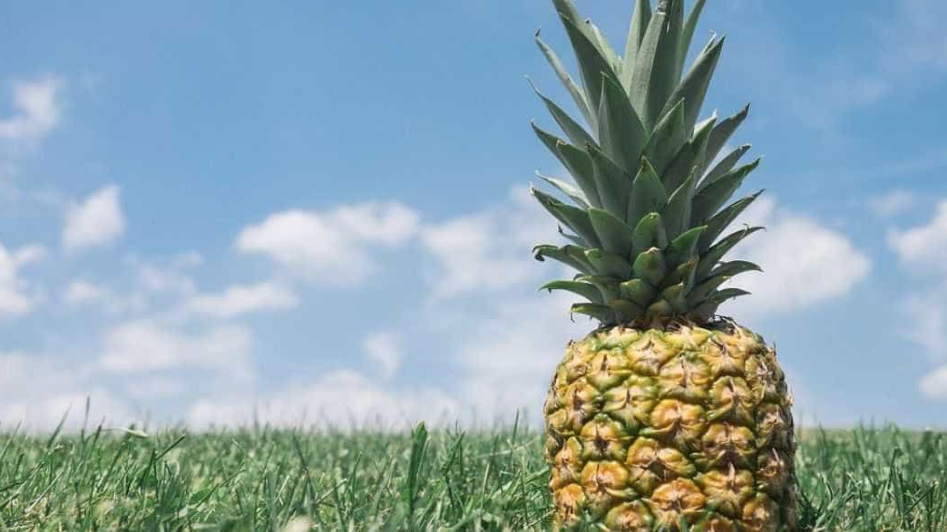 Bons motivos para comer mais abacaxi