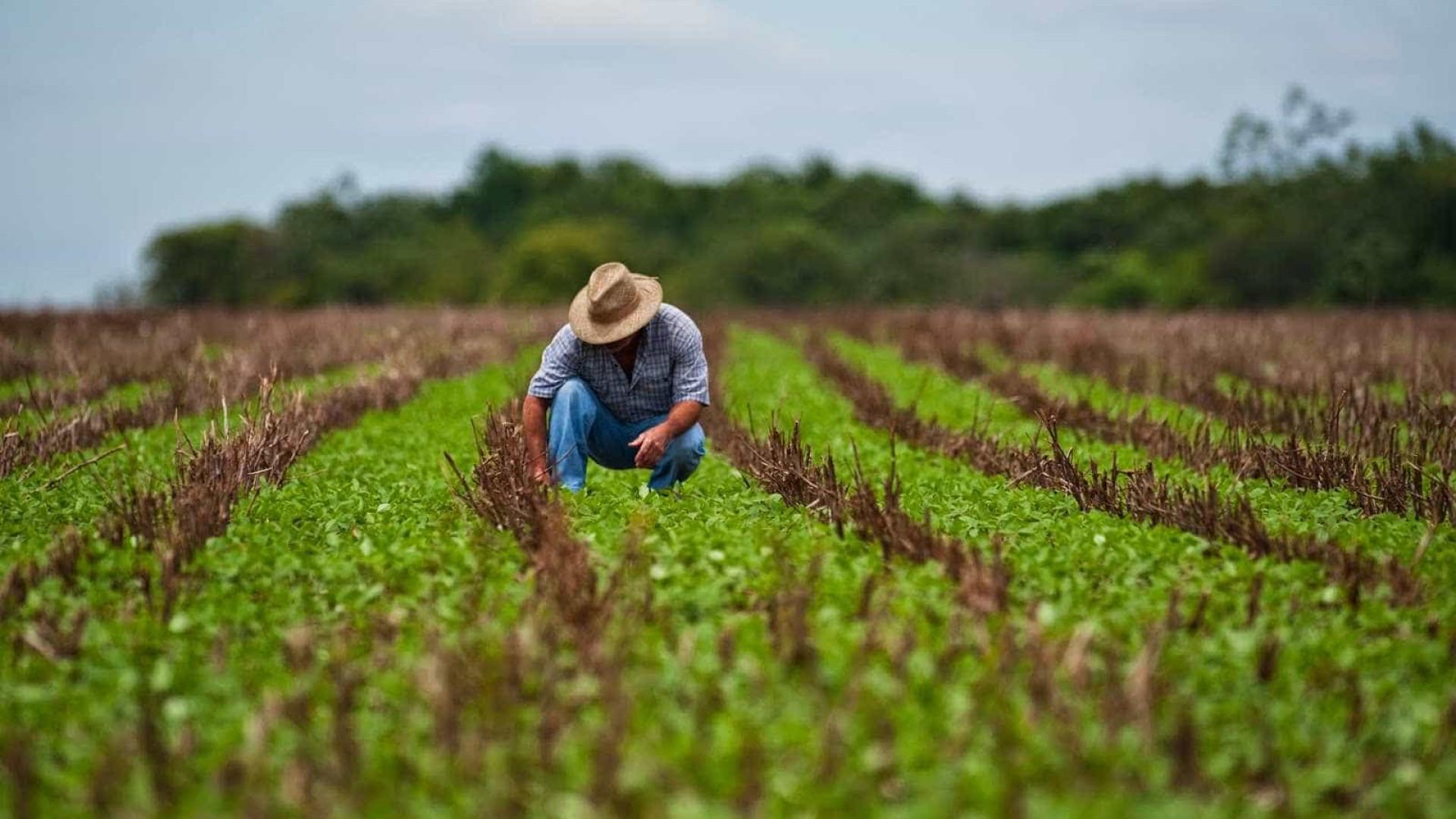 Ministério da Agricultura divulga registro de 42 agrotóxicos