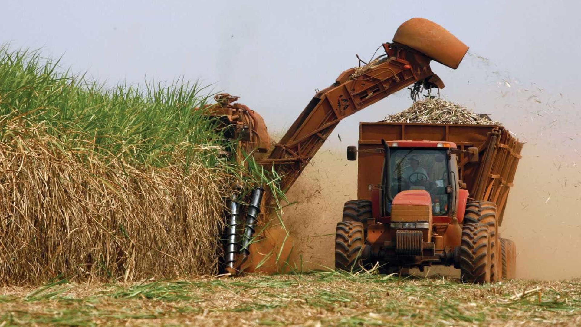 MPF tenta impedir expansão da cana-de-açúcar na Amazônia e Pantanal