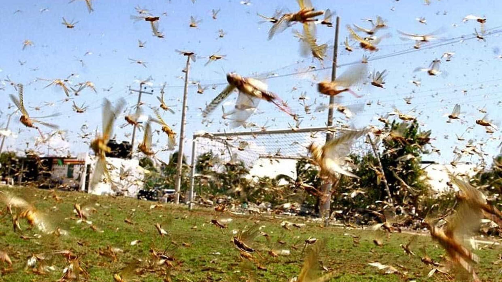 Argentinos monitoram nuvem de gafanhotos