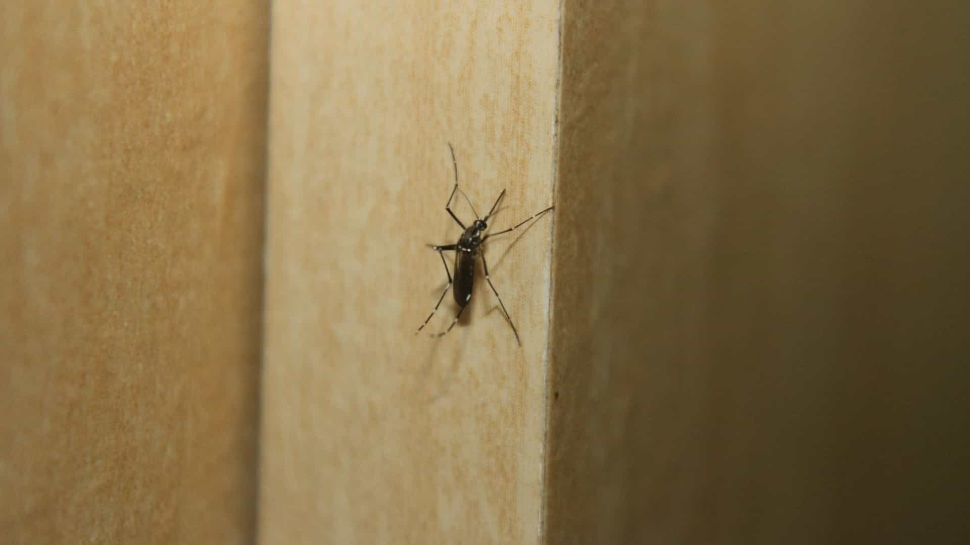 Ministro da Saúde manifesta preocupação com a dengue no verão