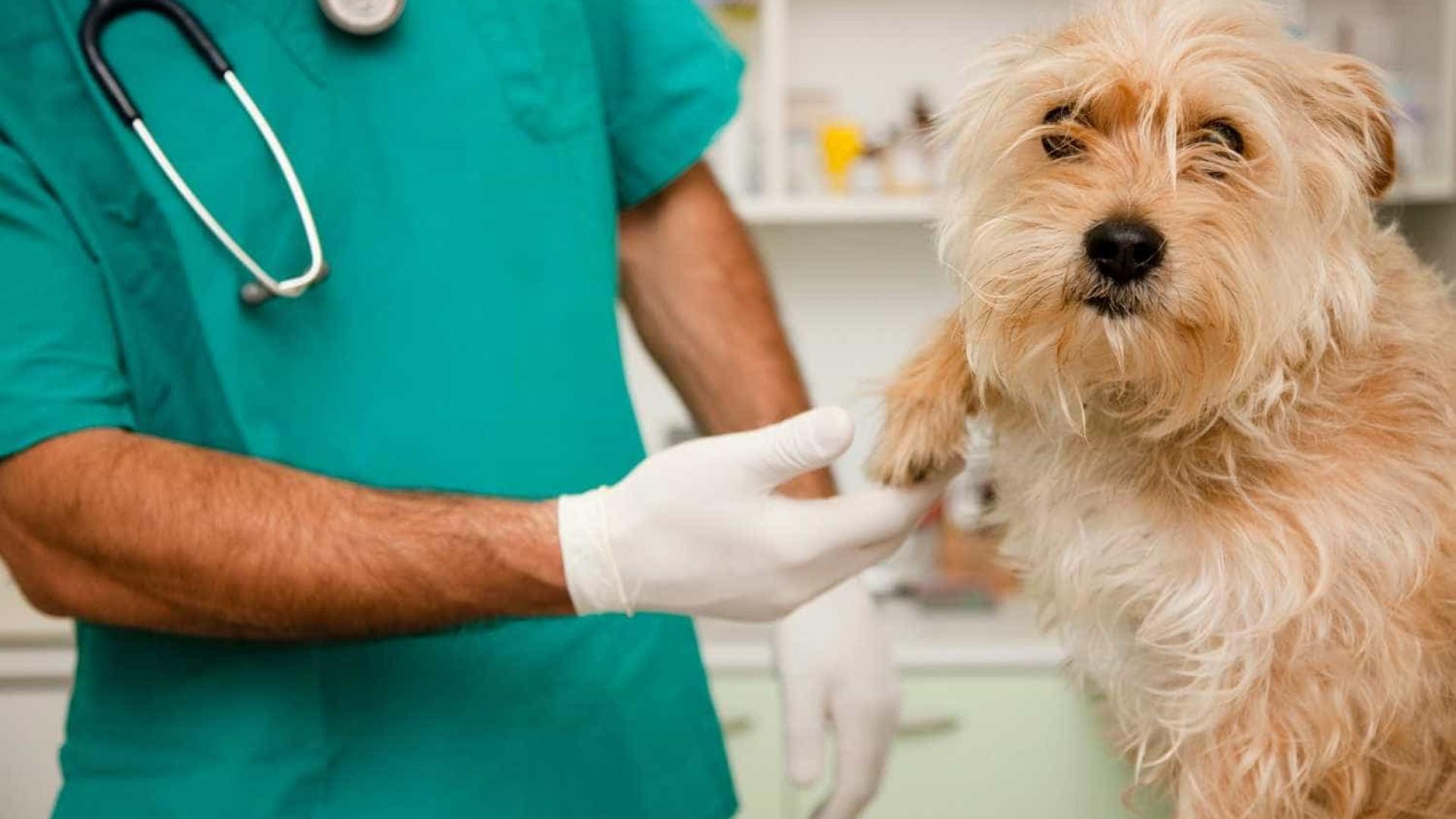 MS pede cadastro de veterinários para ajudar no combate ao coronavírus