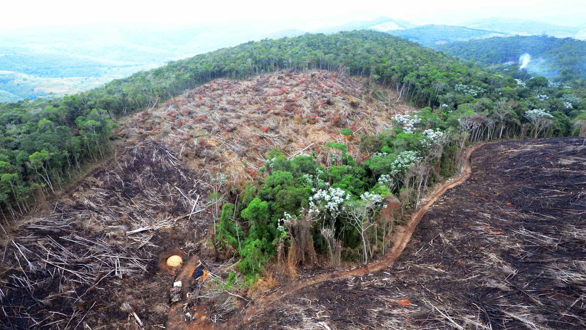 Devastação de áreas indica interiorização do desmatamento