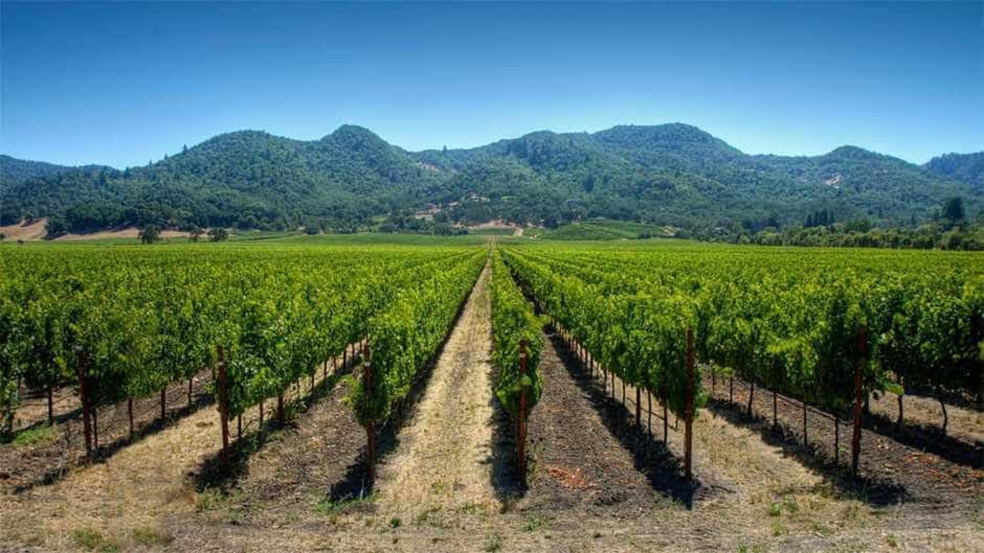 Brasil deve aumentar exportações de vinho e espumantes, diz ministro
