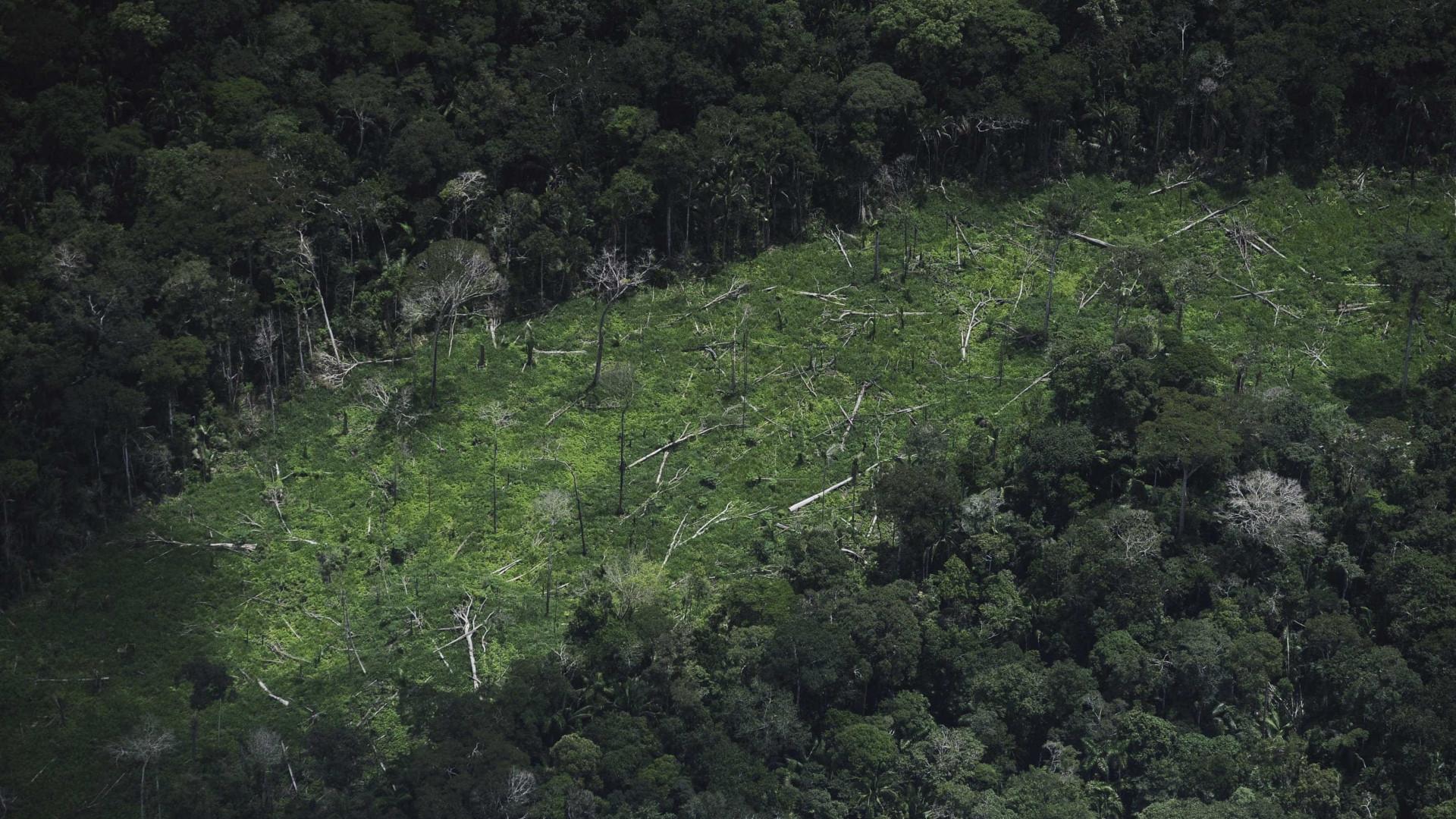 Pregão que terceirizaria vigilância do desmatamento é suspenso