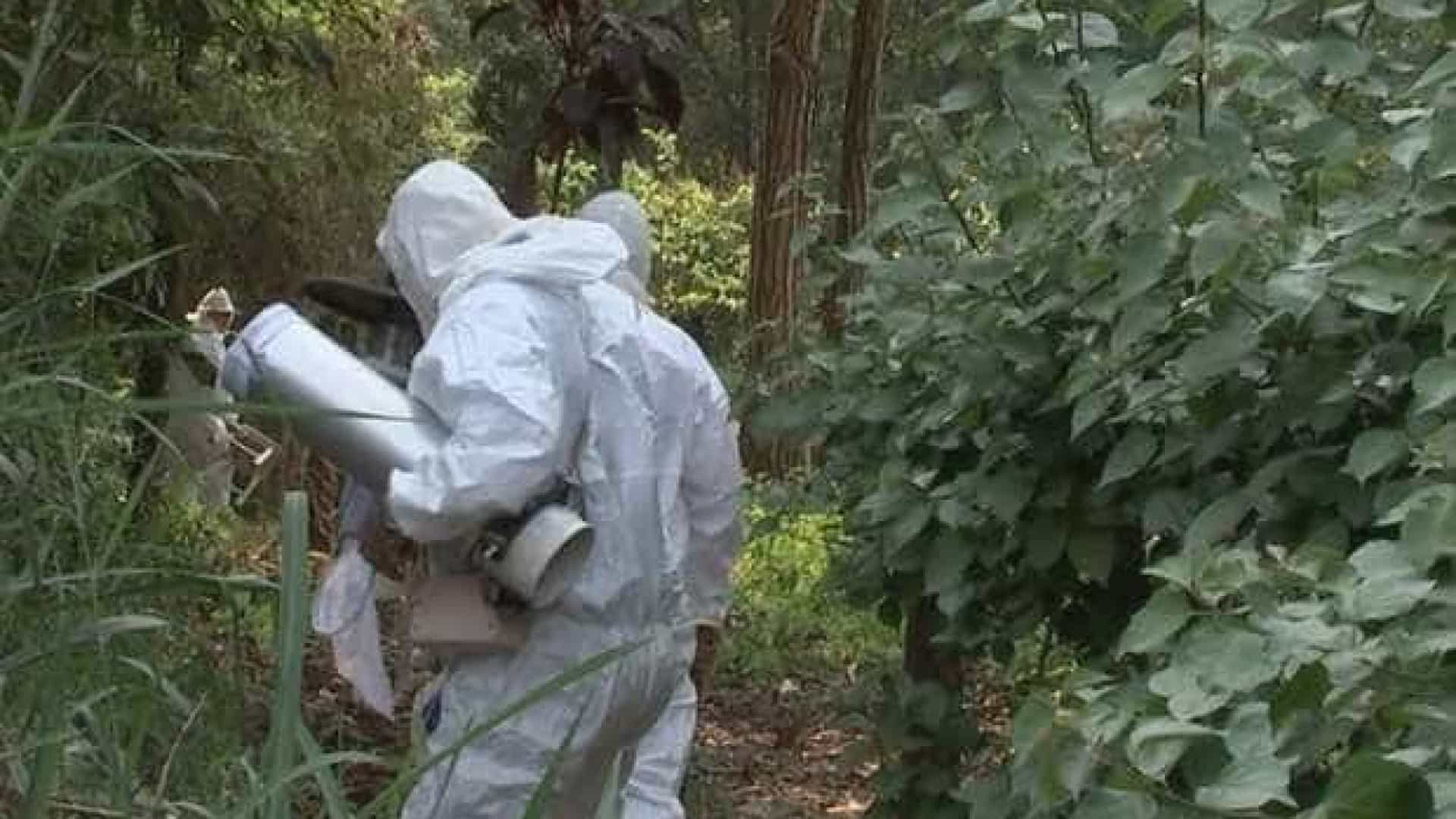 Macaco morre de febre amarela no interior de SP