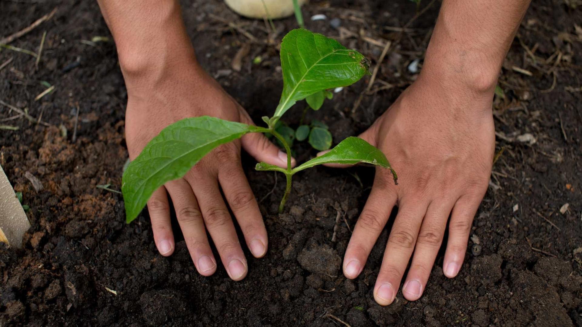 Os melhores aplicativos para cuidar das suas plantas