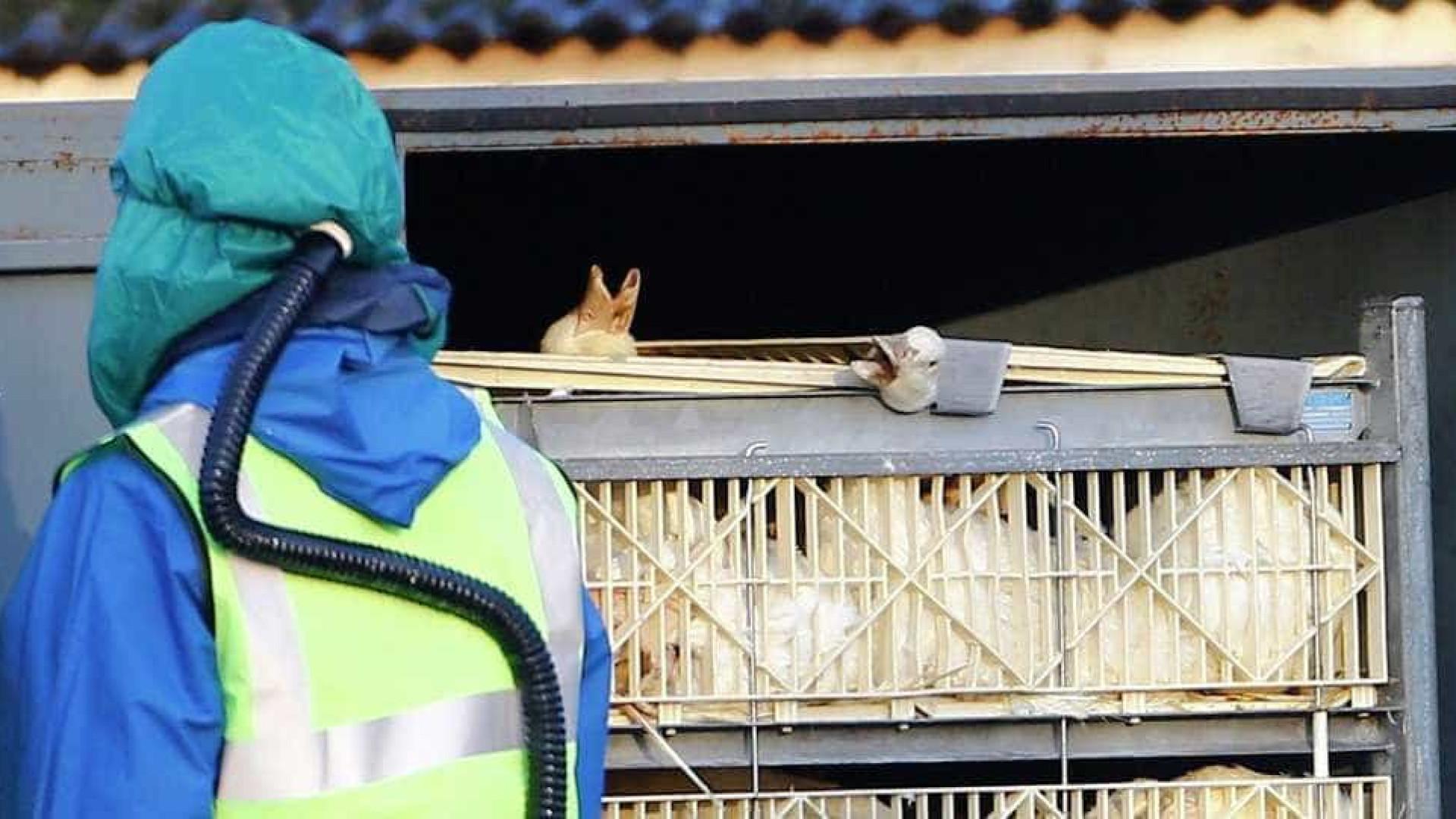 China registra surto de gripe aviária