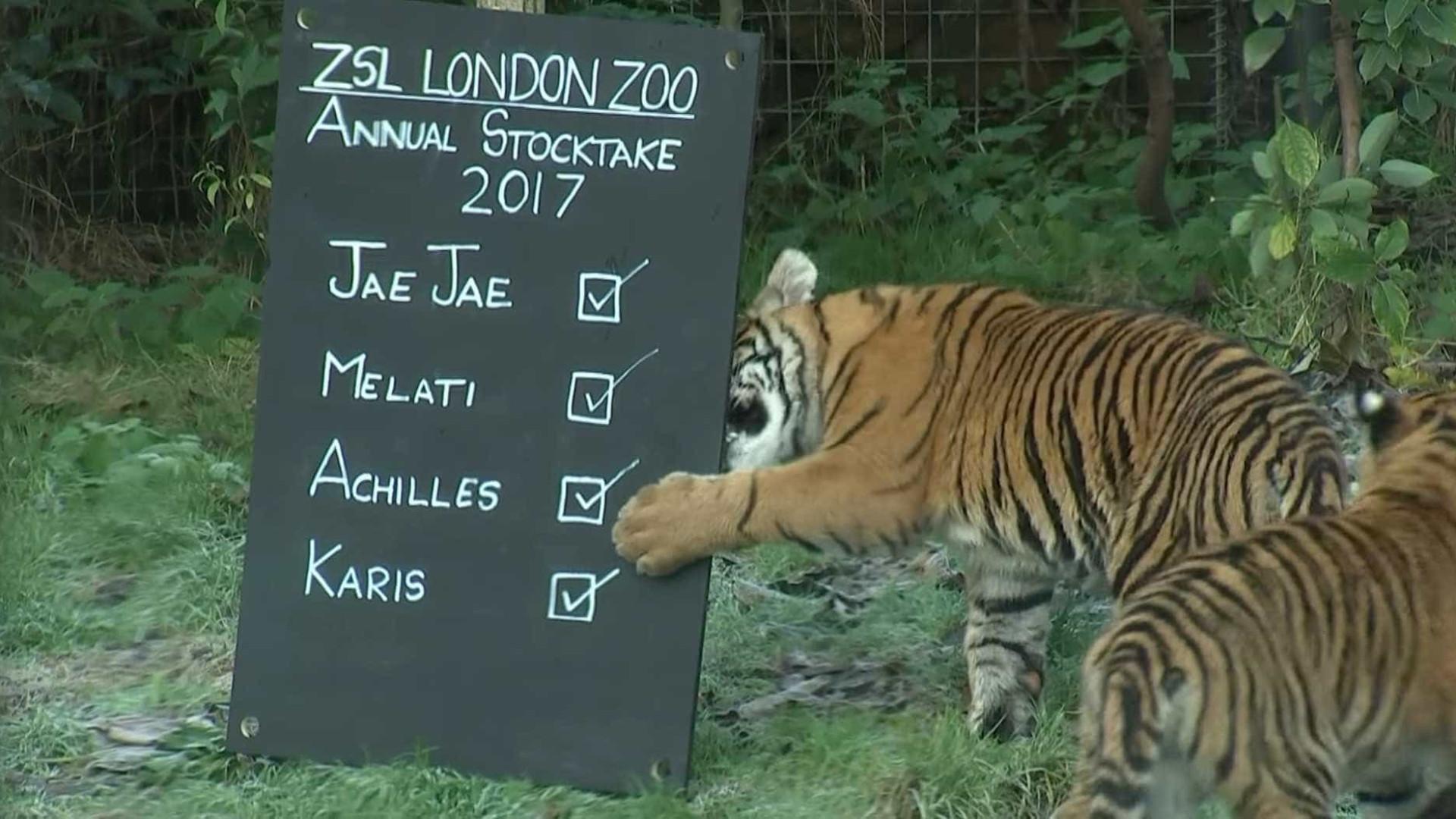 Tarefa difícil: Zoológico de Londres faz contagem de animais; vídeo
