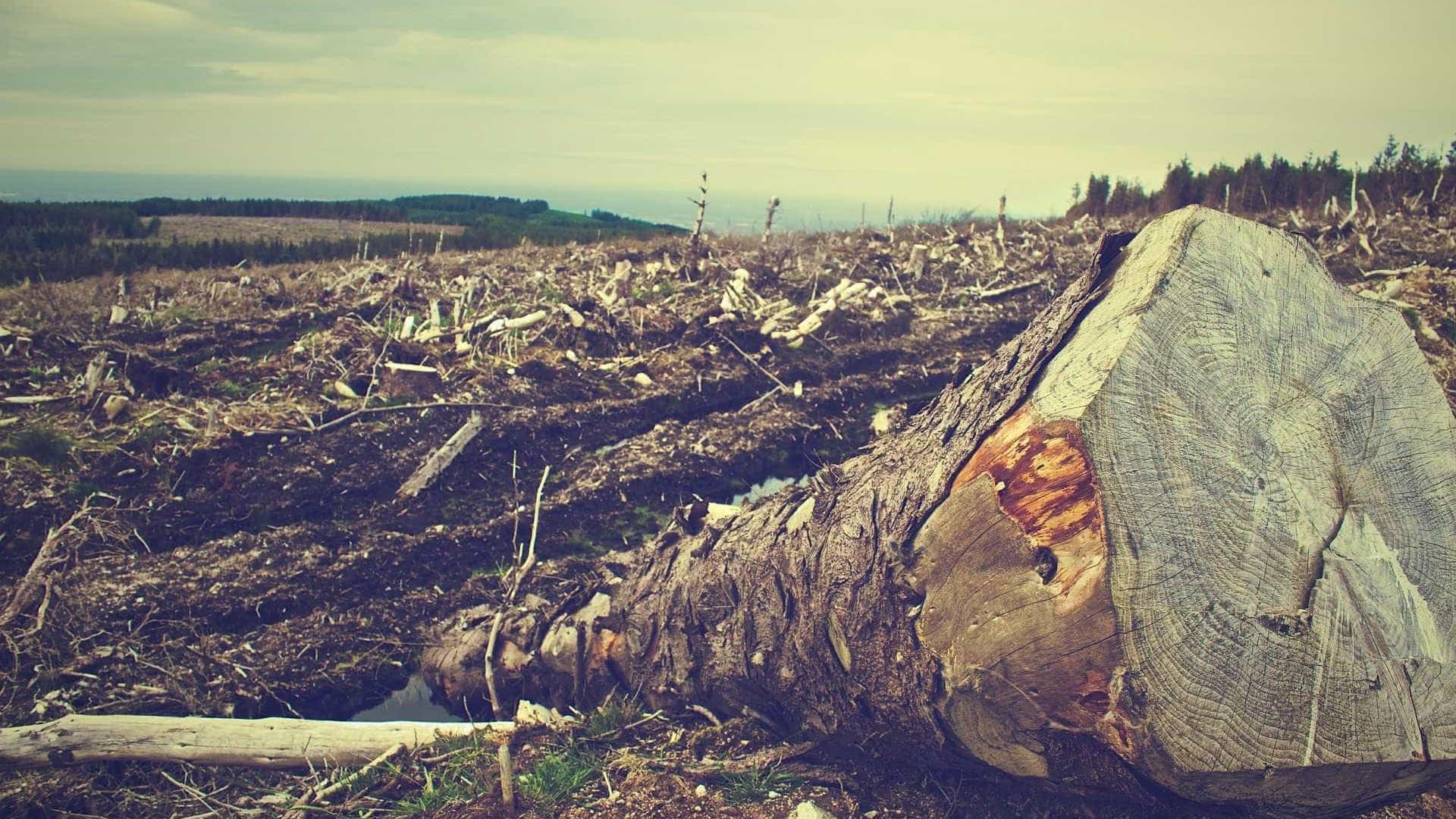 Desmatamento em Unidades de Conservação na Amazônia aumenta