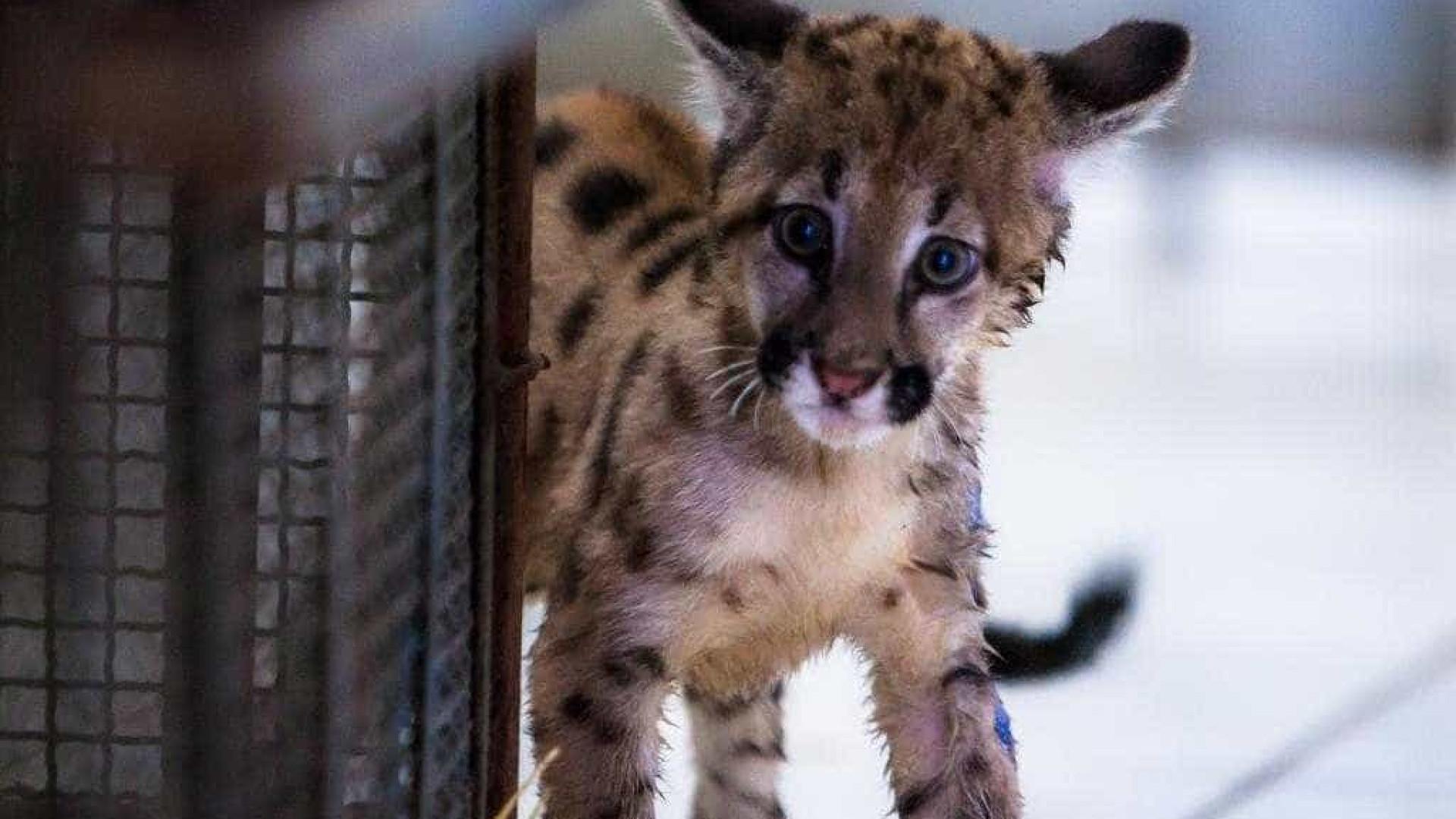 Caça de animais silvestres pode  voltar a ser aprovada no Brasil
