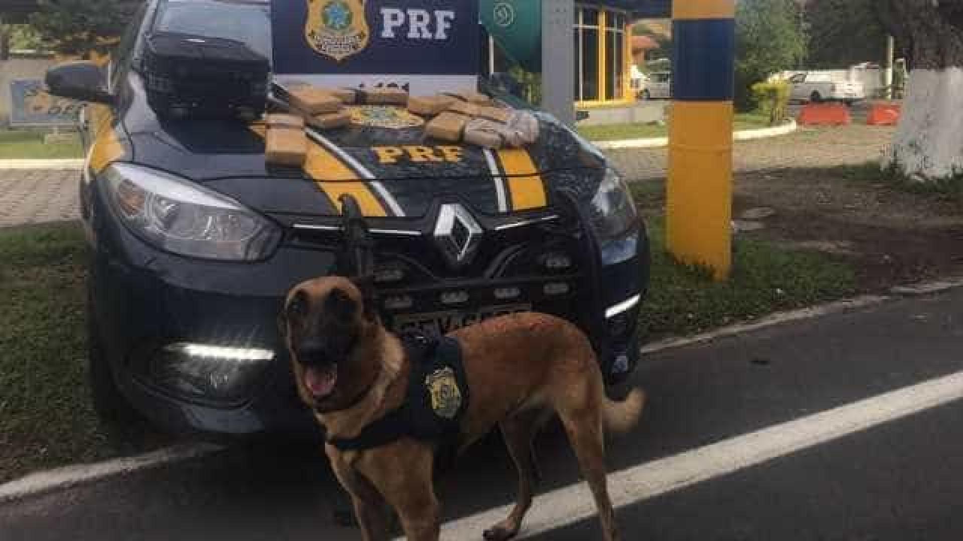 Cão da polícia encontra 6,5kg de maconha dentro de ônibus no RJ