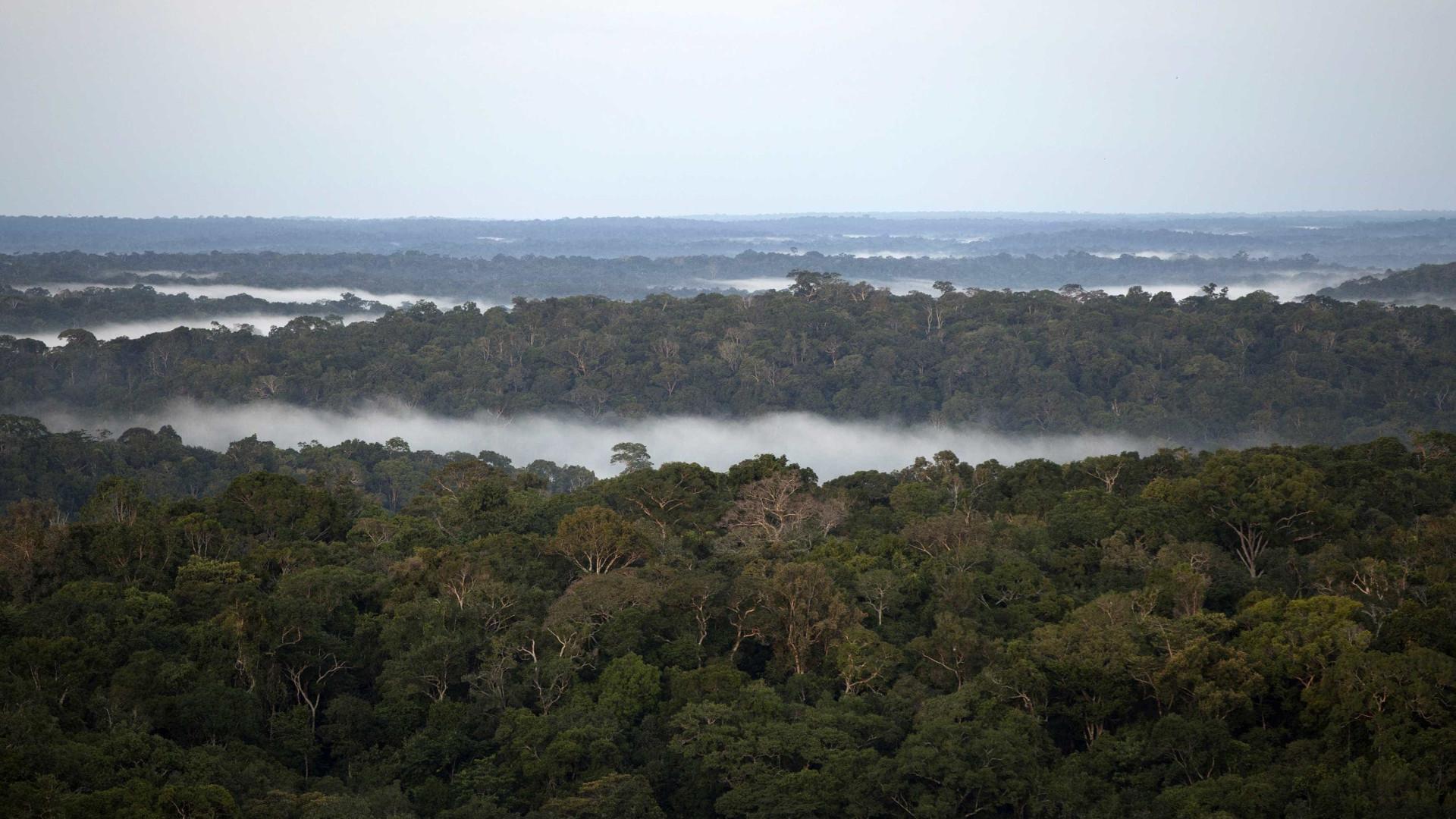 Nasa vê Amazônia mais seca e vulnerável