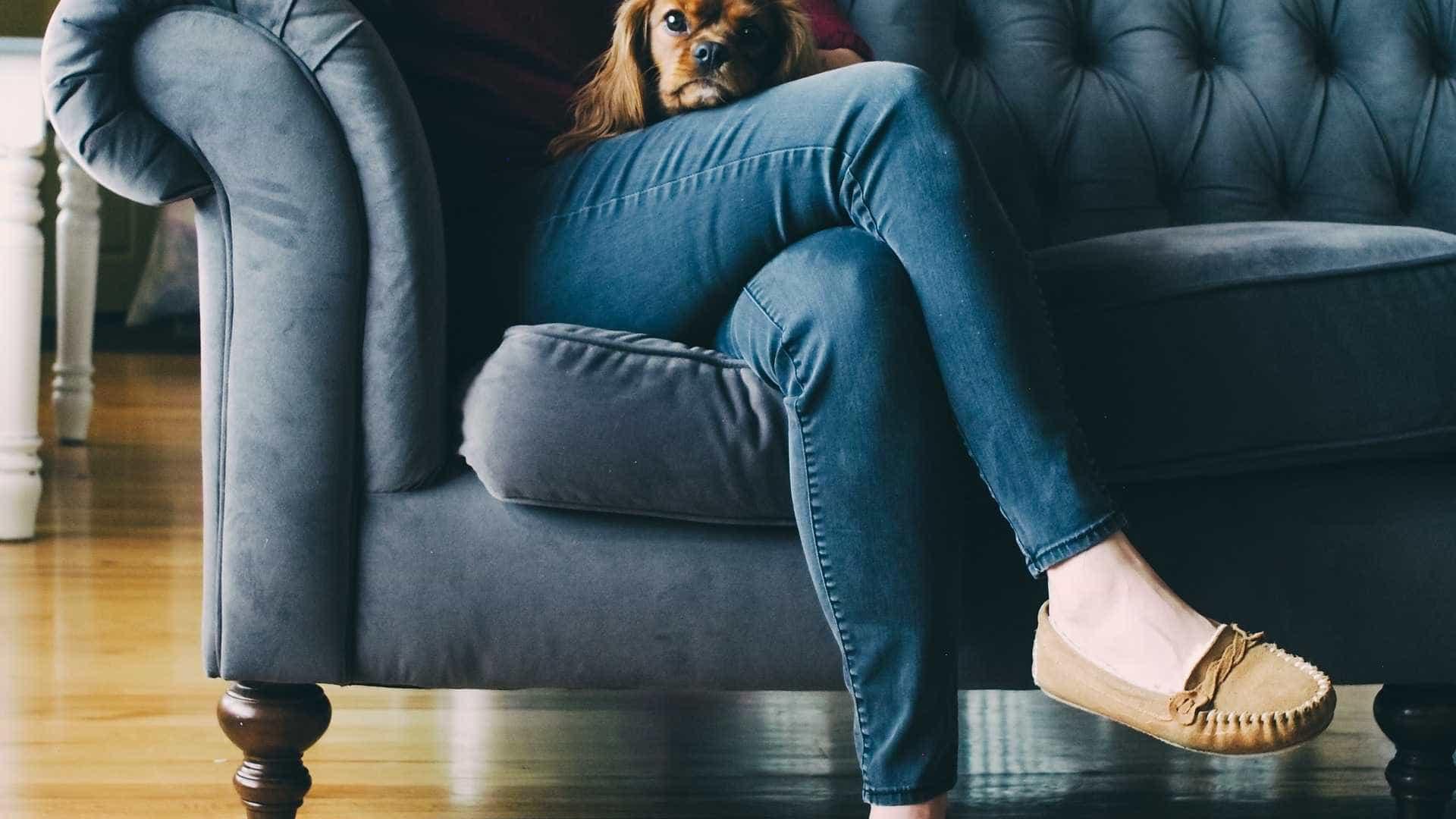 Aplicativos ajudam donos a conciliar vida corrida e cuidados com pets